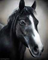 Romeo - Charcoal Drawing by secrets-of-the-pen