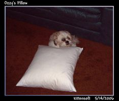 Ozzy's Pillow by Kittensoft