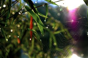 Spider web and morning dew by greyregn