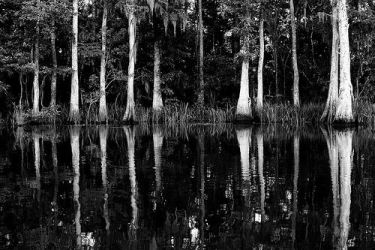 Reflection of a Swamp by MorbidTracie