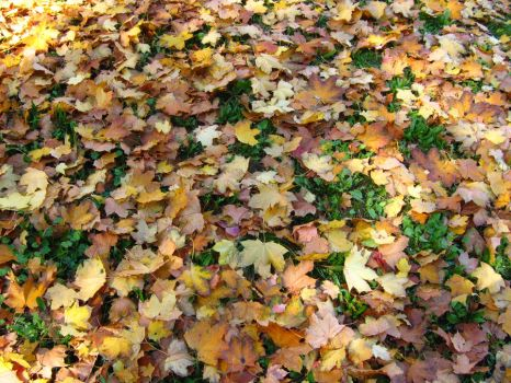 fallen leaves background by Chelidoni