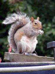Squirrel 2 by Talei-stock