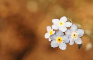 Tiny Flower 2 by ScooterTheDog