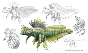 Creature Anatomy lesson2_Fish Amphibian hybrid by Spighy