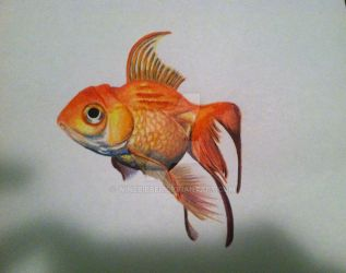 Colored Pencil Gold Fish by winebibber