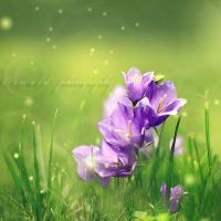 feel the spring by Orwald