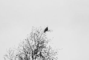 The Crow by Angband