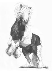 Gypsy Vanner by ReQuay