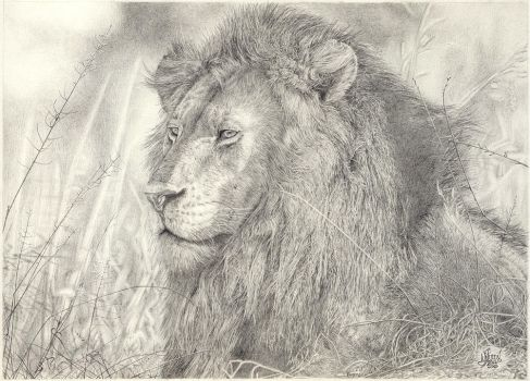 Just A Lion by WarrenLouw