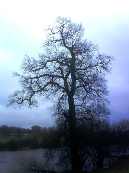 Mote Park 13 - The mighty oak by Only-truth