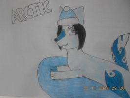Arctic the arctic fox. by The-Badger-Wolf