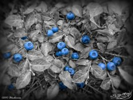 Blueberries by PaSt1978
