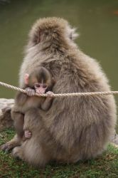 Baby Monkeying Around by Figgy5119