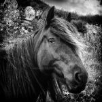 Wild Horse by MichiLauke