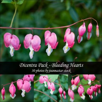 Dicentra Pack by joannastar-stock