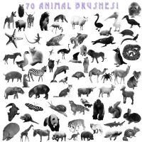 A-Z Animal Brushes by kmh425