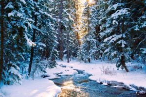 Winter's Enchantment by CharlieA-Photos