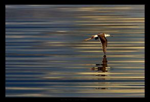 On The Fly by gilad