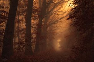-Silence in the wind of the trees- by Janek-Sedlar