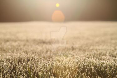 Frosted Grass 4 by lighthousesociety