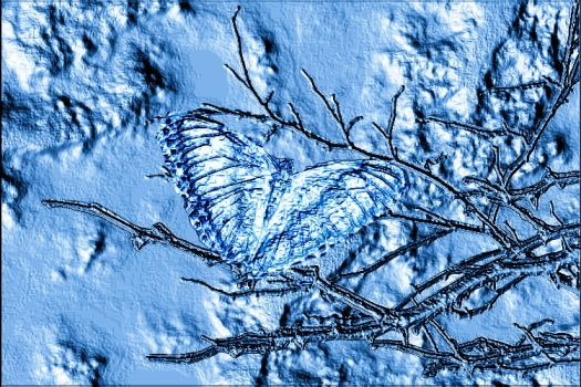 Frozen Butterfly by museismymuse