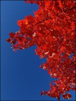 Just Red and Blue II... by MichiLauke
