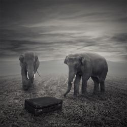 The suitcase by Alshain4