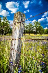 Old Fence Post by StephGabler
