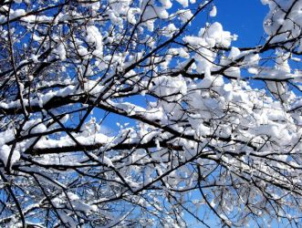 Branches and Blue Sky by TropicalxLondon