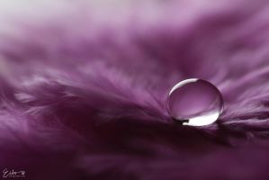 Purple by Eibography