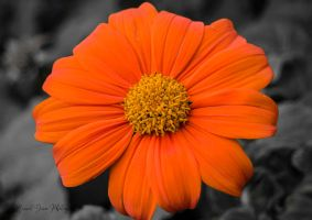 Simply Orange by grimphotography