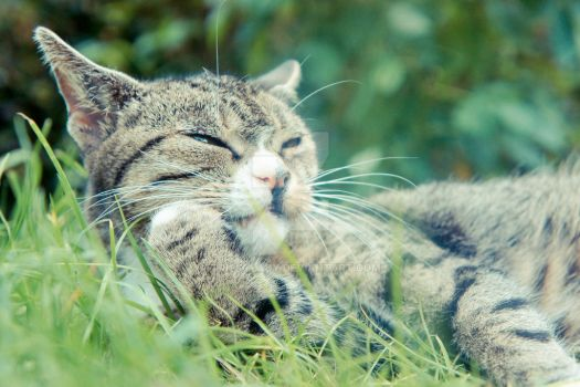 Relaxing Cat by Trickylady