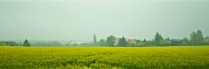 Misty field in Germany by Furuhashi335
