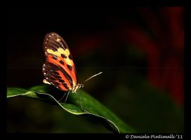 Butterfly III by TVD-Photography