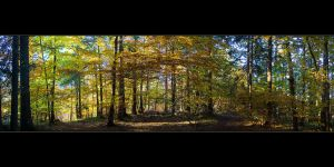 Autumn in the Forest by ZeSly