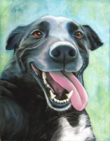 completed Dipper dog by classina