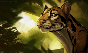Clouded Leopard by Prince-Petrichor