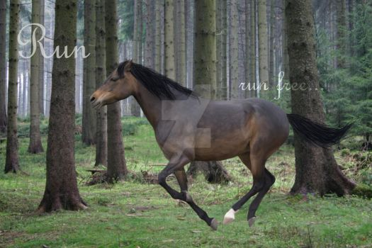 Run by Horse-Lover1