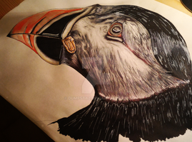 Bird : Puffin by Dumpstaz