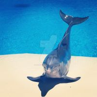 Dolphin by Jazzs-girl-4ever