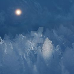 Fool moon over frozen forest by Floriandra