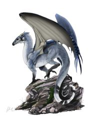 Blue Jay Dragon by HimmeltheBlue