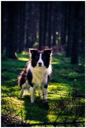 alf by corniger-aries