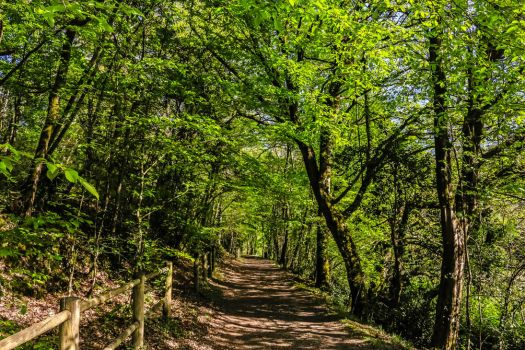 Walk in the woods by SP4RTI4TE