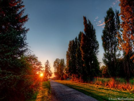 Poplars by IvanAndreevich