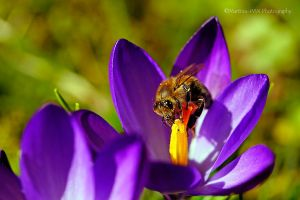 Fruehling 2015 3 by Martina-WW