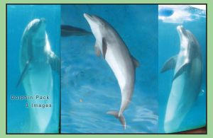 Dolphin Pack 2 by GreenEyezz-stock