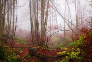 Red Leaves and Fog by Aenea-Jones