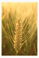 Grain by Haati-and-Mousa
