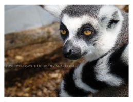 Ring-Tailed by HeWhoWalksWithTigers